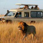 Mara-jeep-safaris