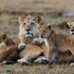Masai-Mara-Camping