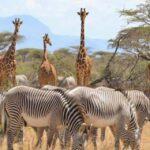 Samburu-tour