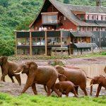 Aberdares-safari