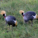 Amboseli-birds