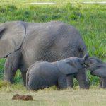 Amboseli-tours