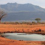 Tsavo-west-Water-hole