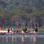 lake-naivasha-boat-ride