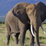 Amboseli-safaris.jpg